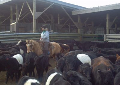 Mary with Cattle